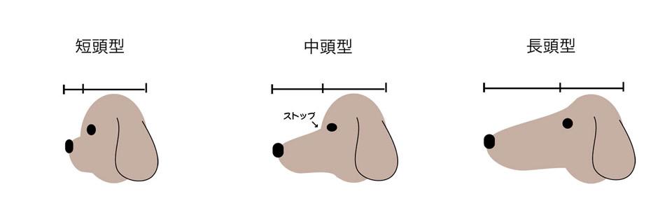 dog_type