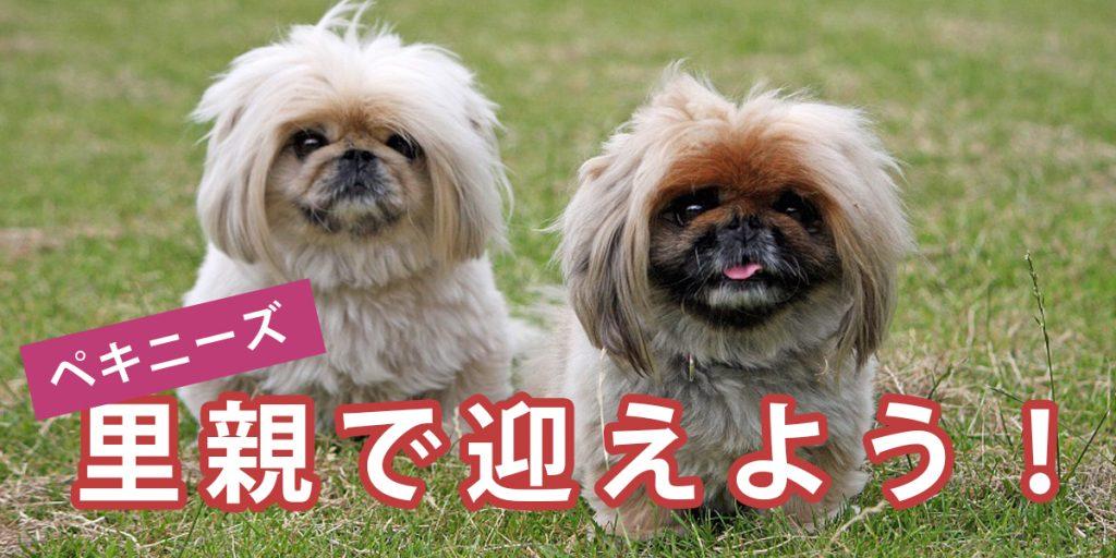 犬 神奈川 保護 カフェ 神奈川県の犬の里親募集情報